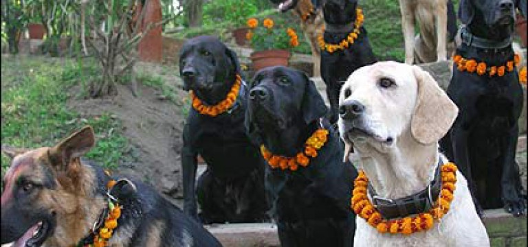 Kukur Tihar – The Nepalese festival dedicated to best friends