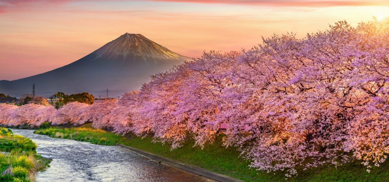 TAILOR MADE TRAVEL: Essential Japan and South Korea