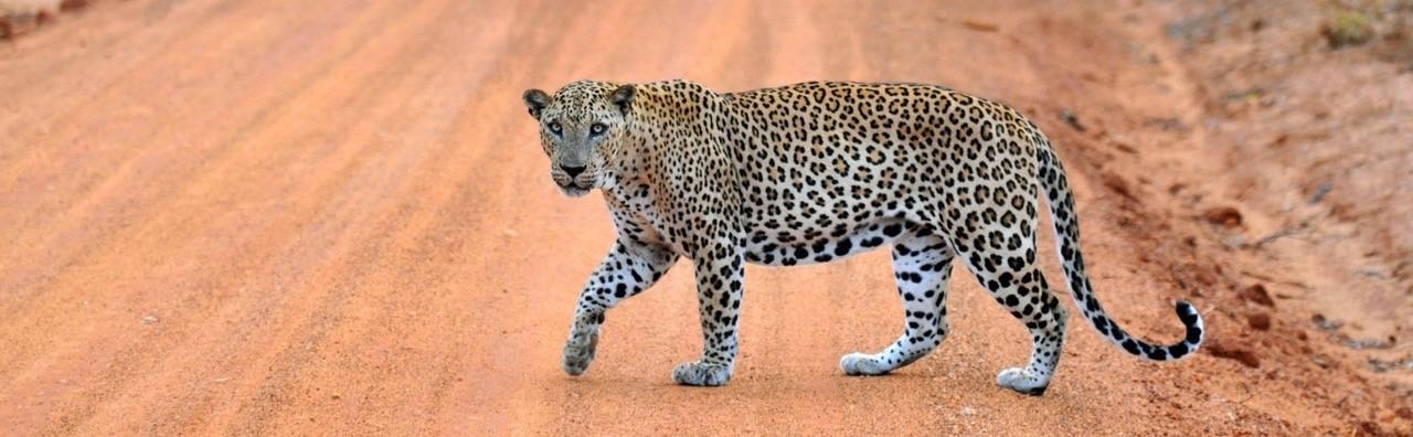 Les Parcs Nationaux du Sri Lanka