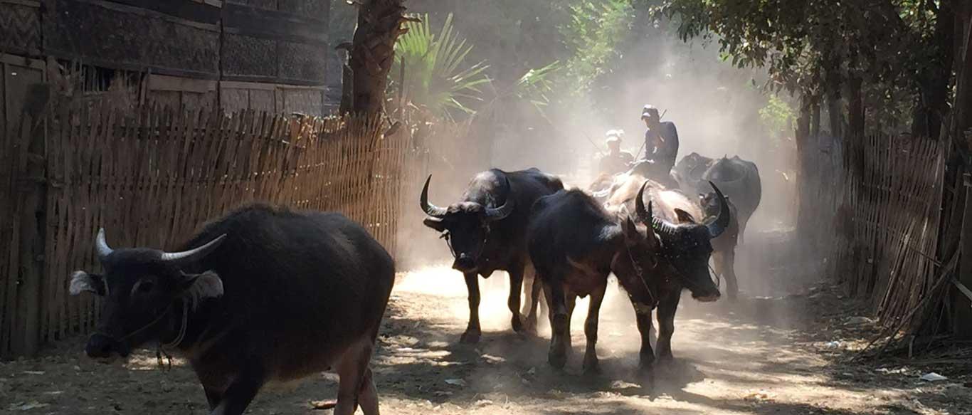 Yandabo Village Experience